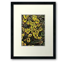 Crocus 1 . Framed Print
