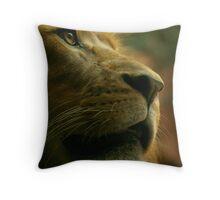 Lion close up waiting for food. Throw Pillow