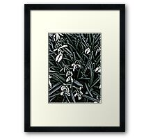 Snowdrop  woodcut Framed Print