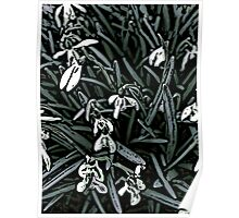 Snowdrop  woodcut Poster
