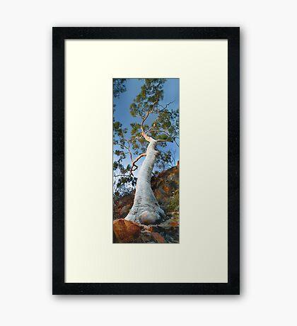 Ghost Gum tree Framed Print