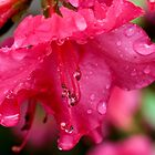 Spring Rains by Otto Danby II