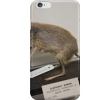 Elephant shrew. iPhone Case/Skin