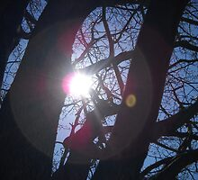 Peeking through the trees by BreakingFree