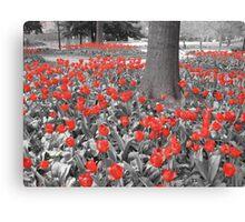 Passion Flowers Canvas Print