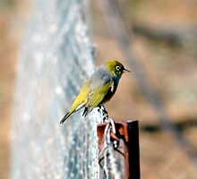 Bird on a Wire by Frank Donnoli