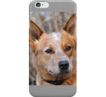 Cattle Dog head with an alert iPhone Case/Skin