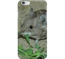 Macroscelides iPhone Case/Skin