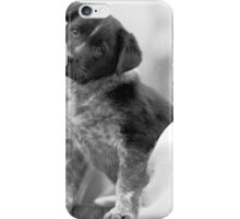 Australian Cattle Dog puppy iPhone Case/Skin