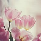 Pink Tulips by Kristybee