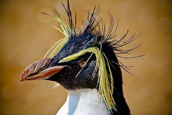 Rockhopper Penguin......... by jdmphotography