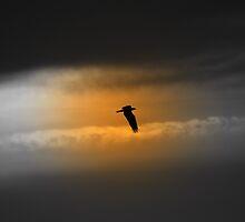 Eye on the Osprey by Karl F Davis
