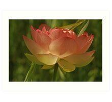 Lotus Flower w/ Willow Tree Art Print