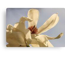 White Locust Flower Canvas Print