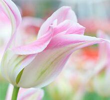 Emollient Lightness. Tulips of Keukenhof by JennyRainbow