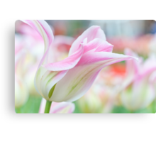 Emollient Lightness. Tulips of Keukenhof Canvas Print