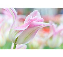 Emollient Lightness. Tulips of Keukenhof Photographic Print