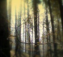 Mysterious Wood by Mojca Savicki