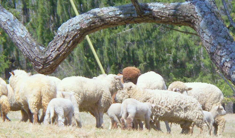 All We Like Sheep ...   by fiat777