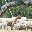 All We Like Sheep ...   by Rick  Todaro