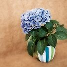 Flower pot by shadycat