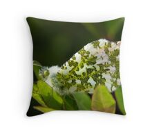 Male Orange Tip Butterfly Throw Pillow