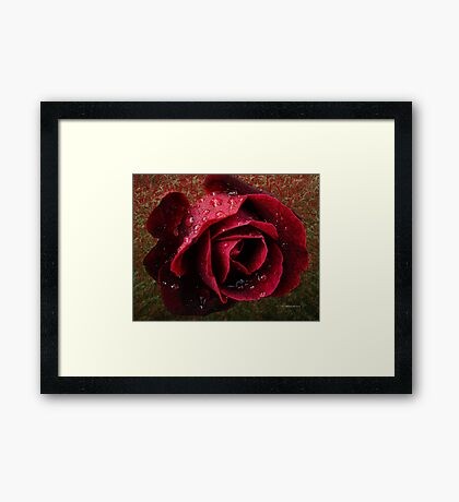 Textured Rose~ Framed Print