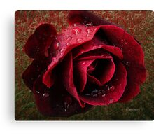 Textured Rose~ Canvas Print