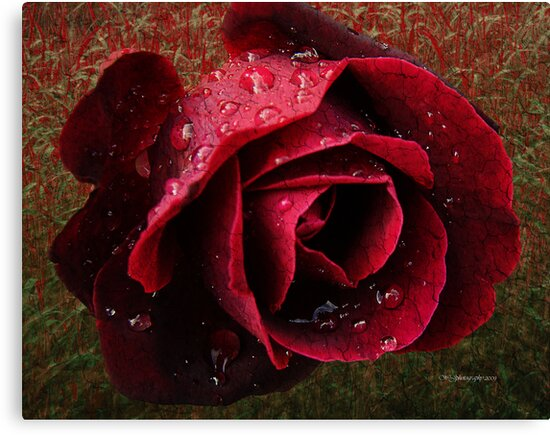 Textured Rose~ by WJPhotography