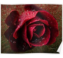 Textured Rose~ Poster