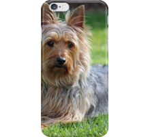 An adult male Silky Terrier. iPhone Case/Skin