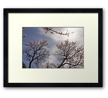 Spring Time and Tree Blossoms Framed Print