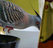 bird on the side by Princessbren2006