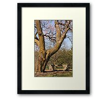 Old Tree and Bench Framed Print