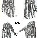 Hand and foot by enelyawolfwood