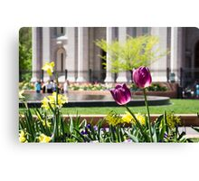 Purple Tulips in Temple Square Canvas Print
