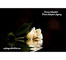 Photo Adoption Agency  Photographic Print