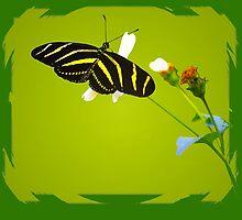 Zebra Butterfly by George  Link