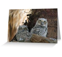 Great Horned Owl Nestlings Greeting Card