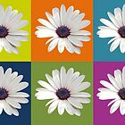 African Daisy Collage by taiche