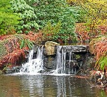 Stanley Park Waterfall by Tamara Valjean