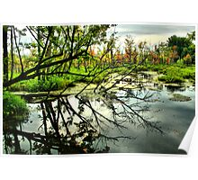 Tree Reflexion Poster