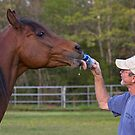 Beer for my Horses by Sharon Morris