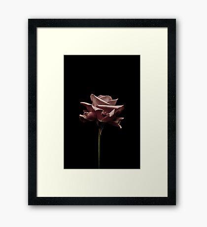 Pink roze Framed Print