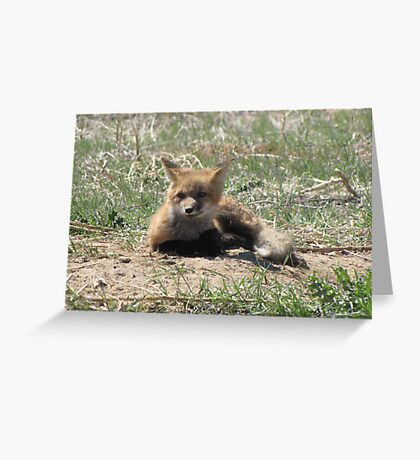 There goes the neighborhood (baby foxes) 04 Greeting Card
