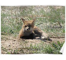 There goes the neighborhood (baby foxes) 04 Poster