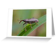 Mondo Weevil Greeting Card