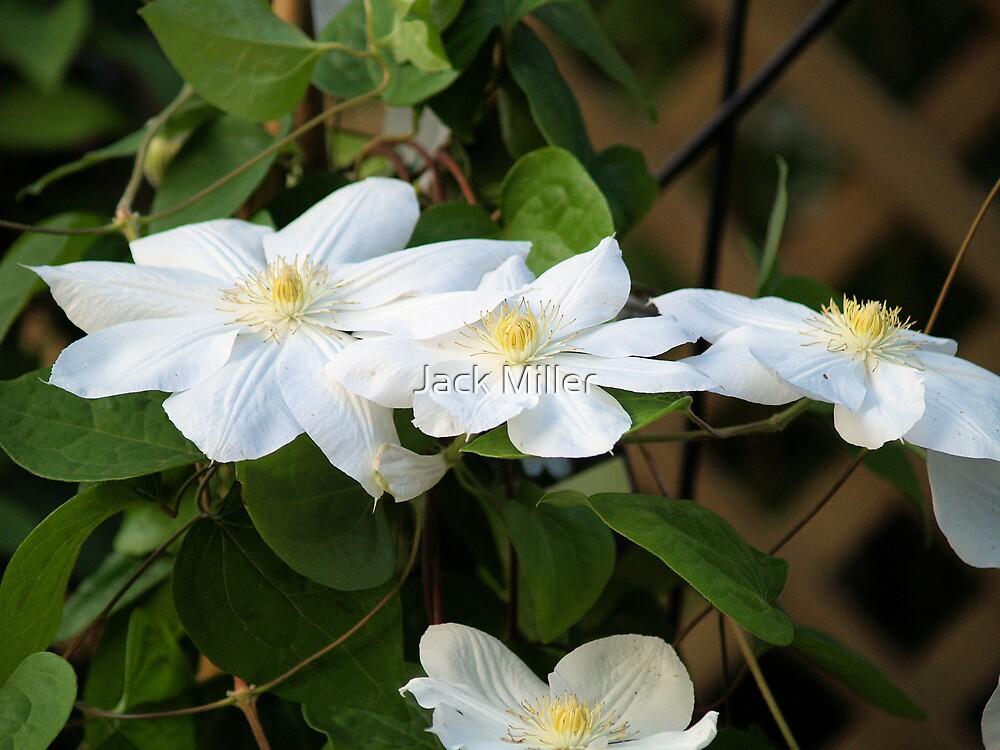 Flower 2 by Jack Miller