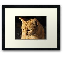 Ginger Framed Print