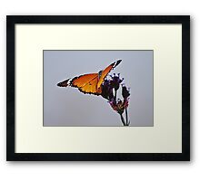 Butterfly touch Framed Print